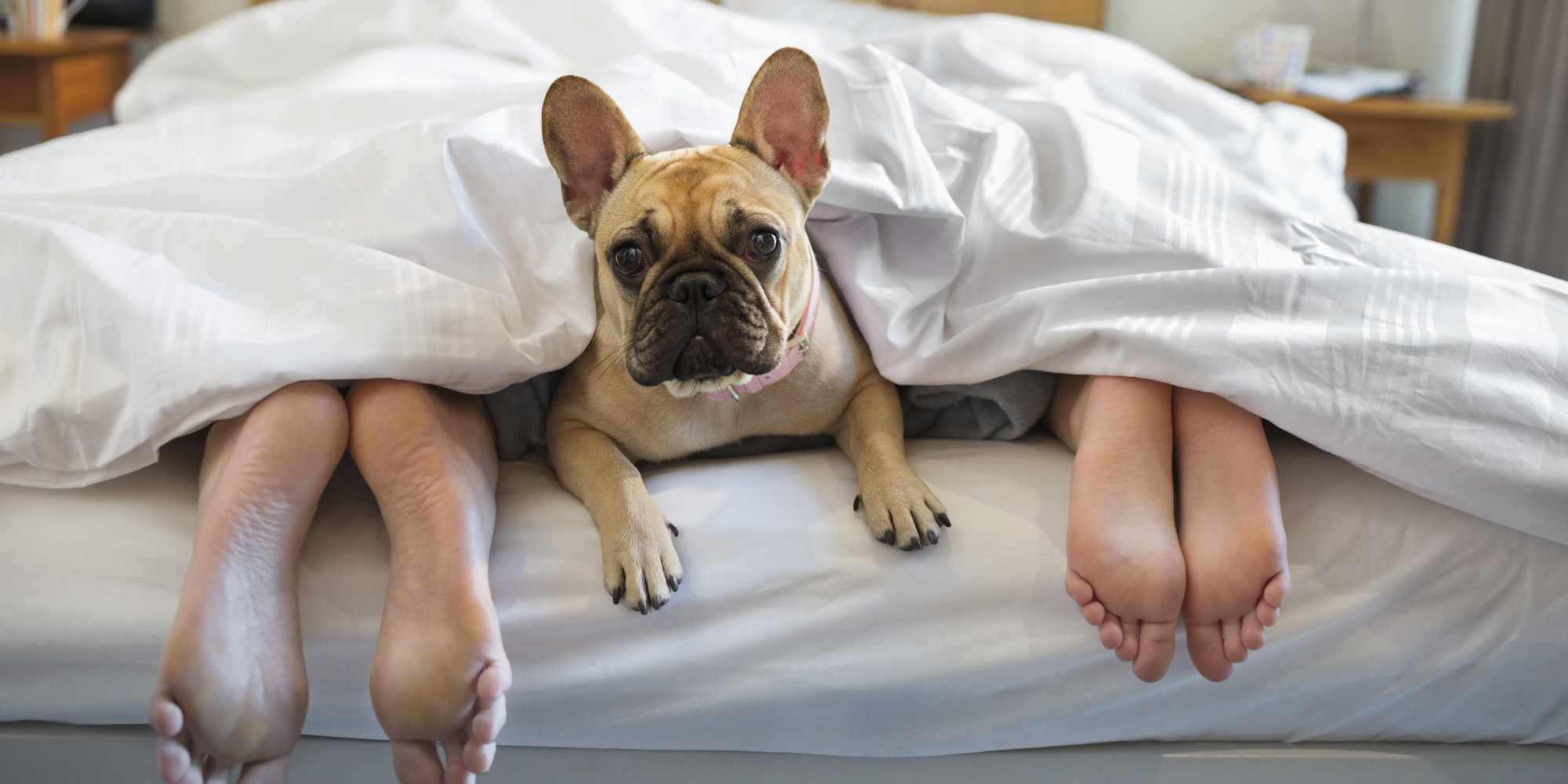 New Research Shows That Sleeping With Your Dog is A Bad Idea