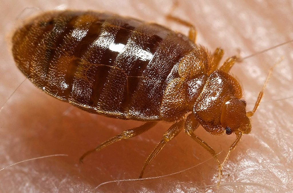 The 10 Worst US Cities For Bed Bugs